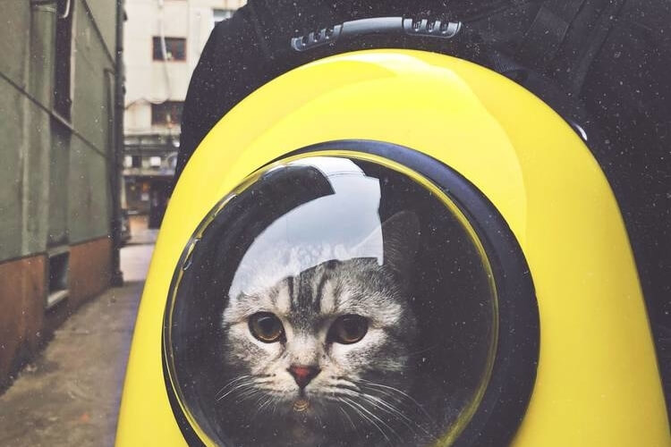 Best Cat Backpacks